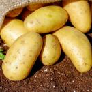 Potatos - Picture taken from pixabay.com